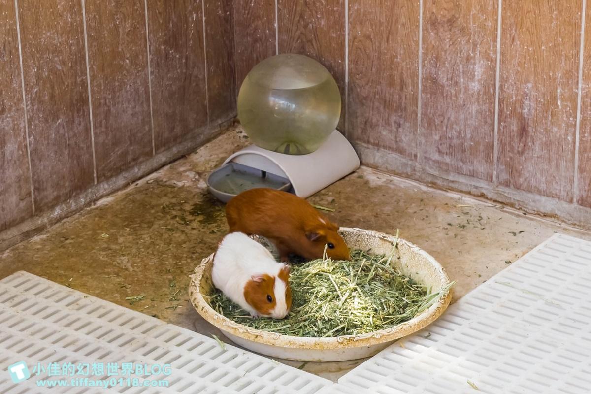 [嘉義景點]三隻小豬觀光農場/大草原+多功能溜滑梯+餵食動物+開放式鳥園+親子DIY/好拍好玩的嘉義親子景點推薦